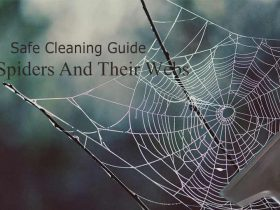 How To Get Rid Of Spiders And Their Webs From Your House