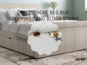 How to Remove Bed Bug Droppings And Blood Stains