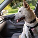 How To Get Dog Hair Out Of Car - Clean Car Seat
